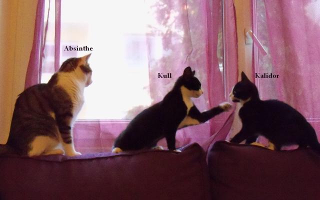 3 chats (nommés)