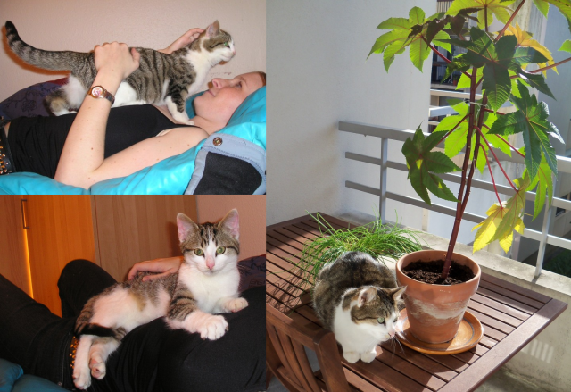 absinthe (3 photos)