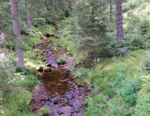 Encore la forêt