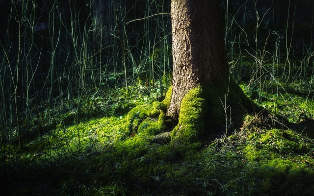 02185_treeoflife_1440x900
