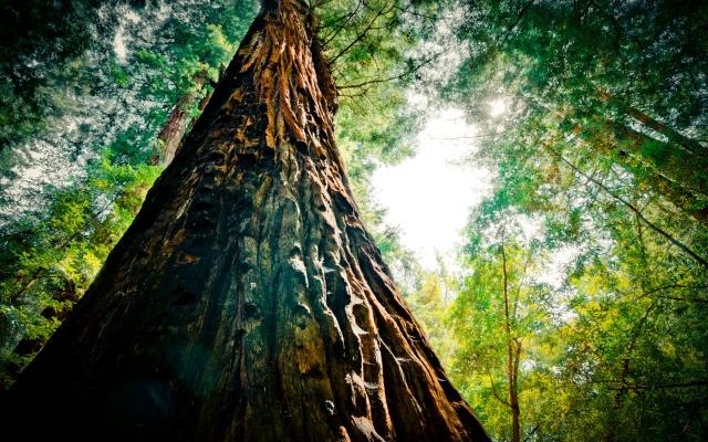 02623_redwoodextreme_1440x900