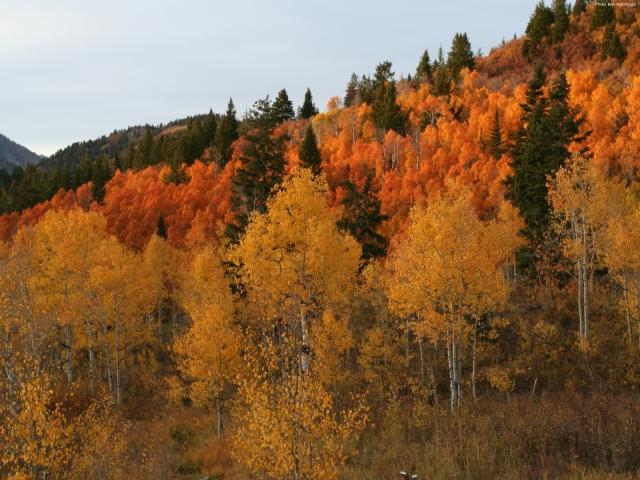 autumn_mountain_1600x1200