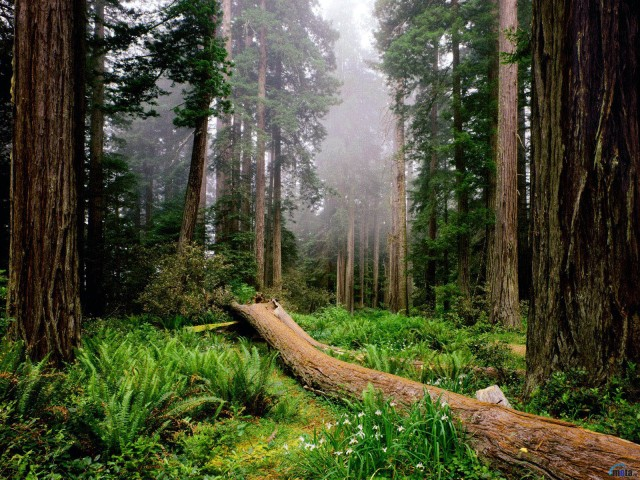 bosque-1600-x-12001