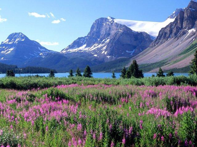 Bow-lake--canadian-rockies--alberta-wallpaper_1600x1200
