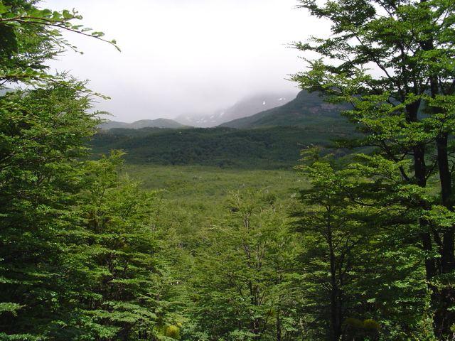 Forêt_Magellanique_Décidue