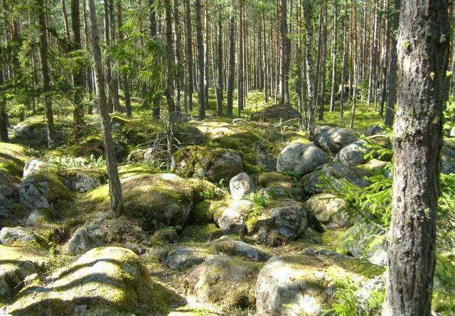 foret d'estonie