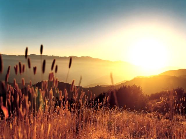 hay_in_summer_light_1600x1200