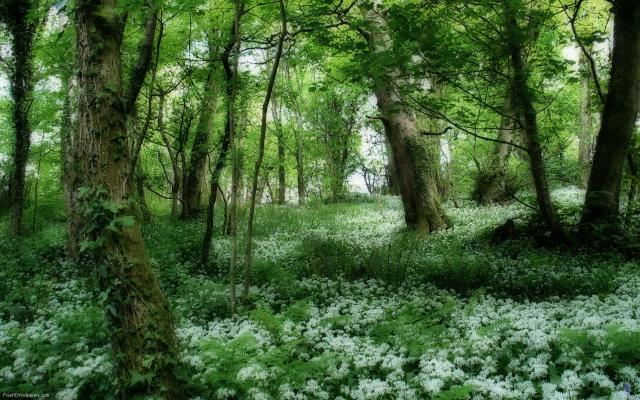 Ireland-Glade-1