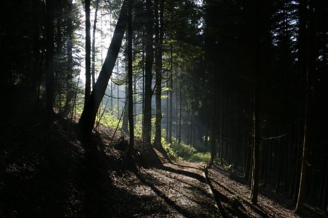 lumiere_arbres_foret_blanc_noir_soleil_feuiles_brun