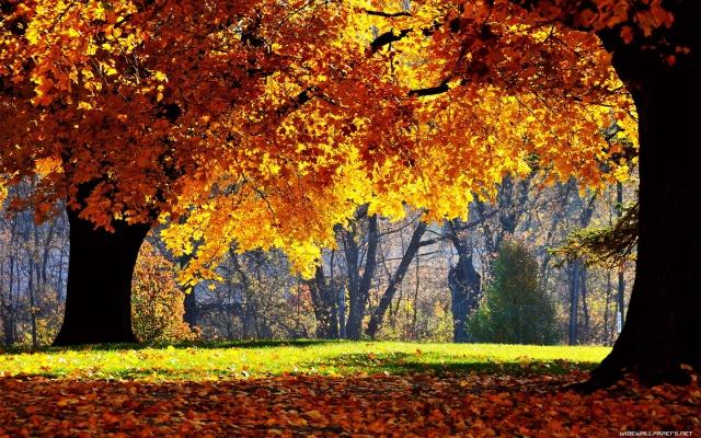 nature-wallpaper-1440x900-004