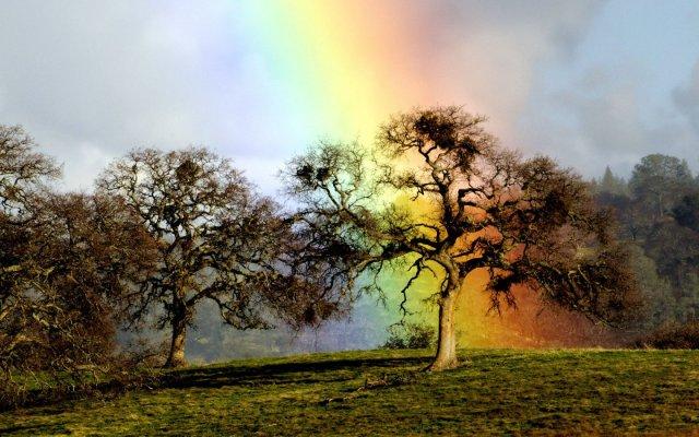 near-at-rainbow_92759-1440x900