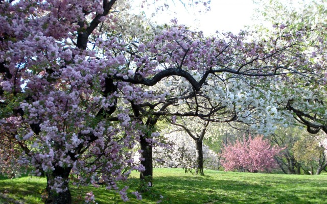 new-york-botanical-garden-1440-900-4979