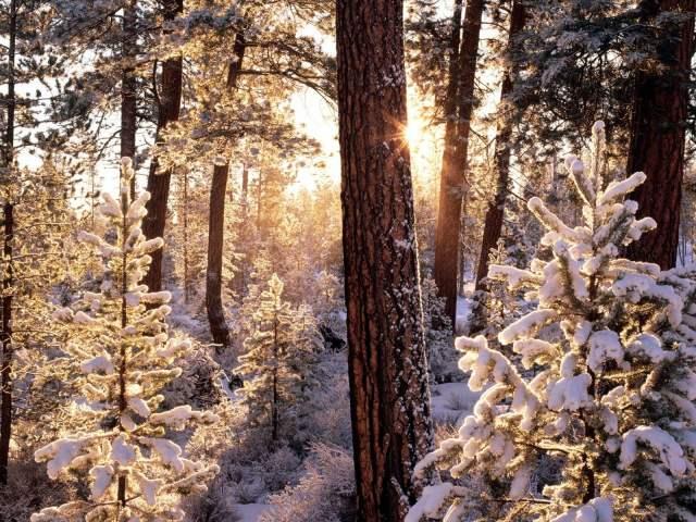 oregon_winter_1600x1200