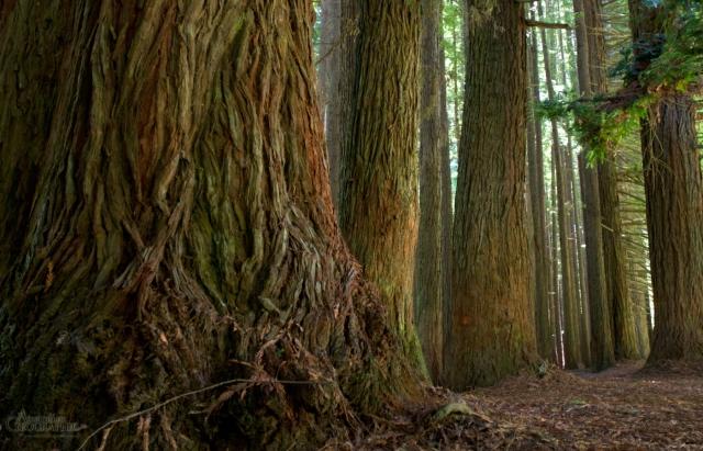 otways-forest
