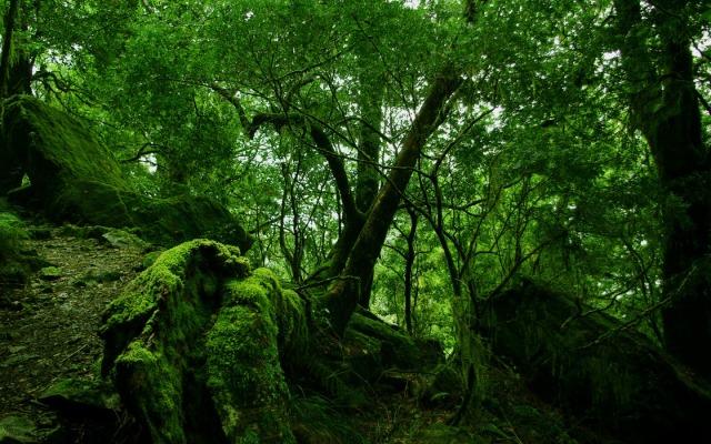 rainforest-moss-1440-900-3844