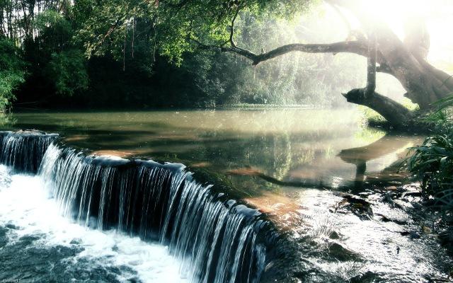 rainforest_creek_wallpaper_by_nxxos