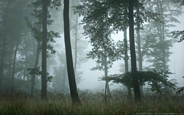 SBRIERE_Forest2_Wallpaper_1440x900