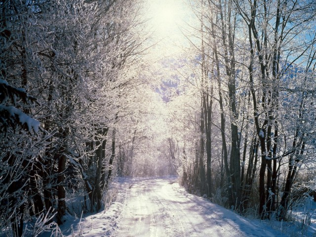snowy_wood_1600x1200