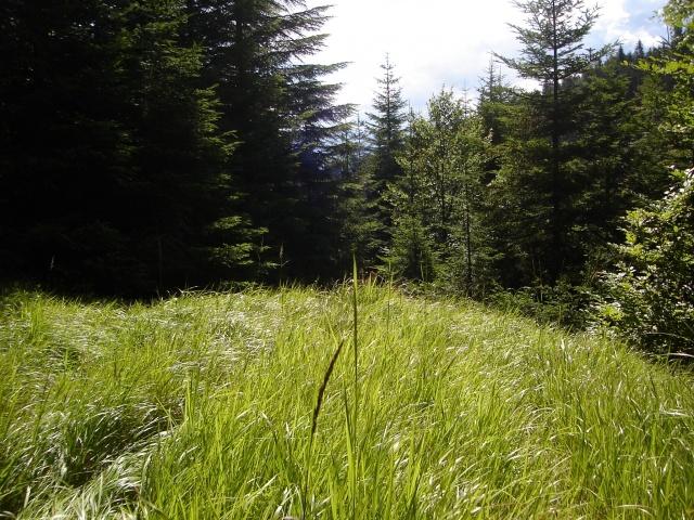 spring_grass_1920x1440