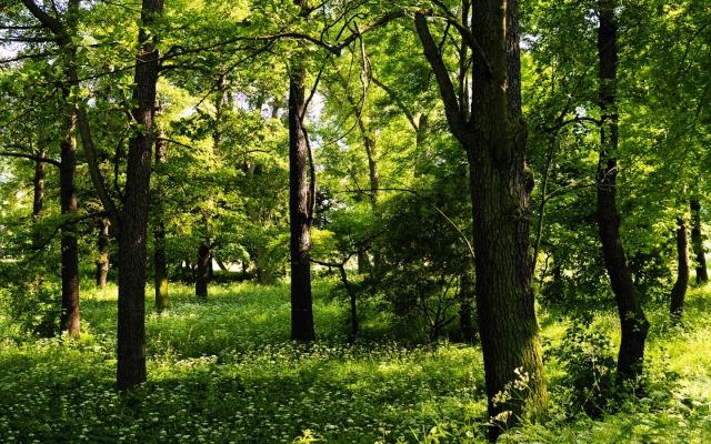 trees-1440-900-3965