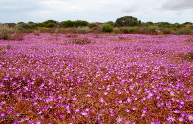 wa-wildflowers