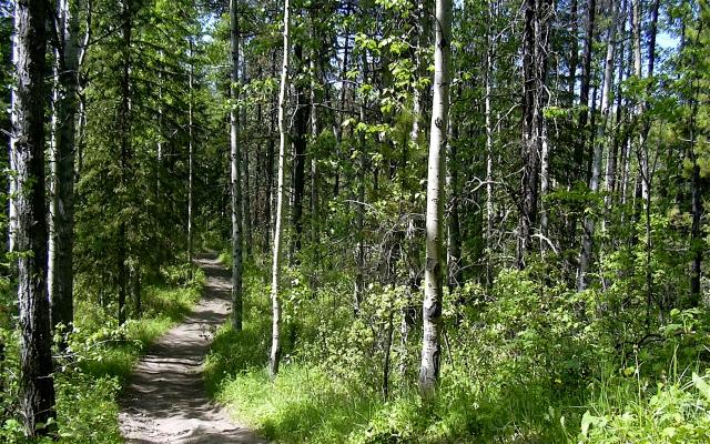 Wood_Path_by_bazokajoe_2k
