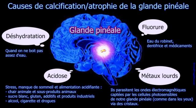causes de calcification de la glande pinéale fluorure métaux lourds acidose déshydratation