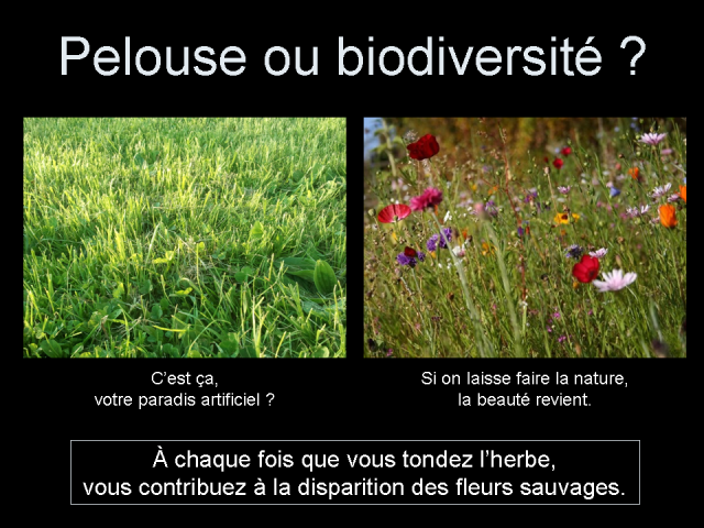 Pelouse ou biodiversité ?