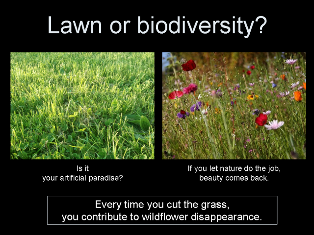 Lawn or biodiversity?