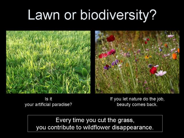 Lawn or biodiversity?