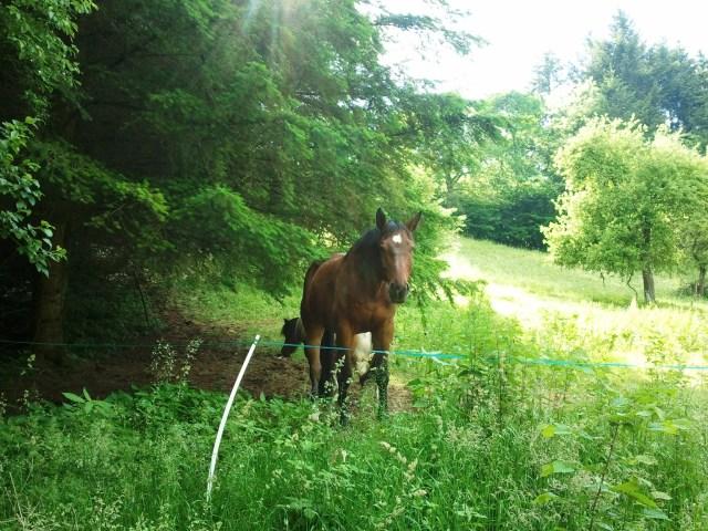 Cheval et mini-poney