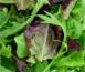 Légumes salade feuilles vertes