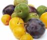 prune, mirabelle, quetsche