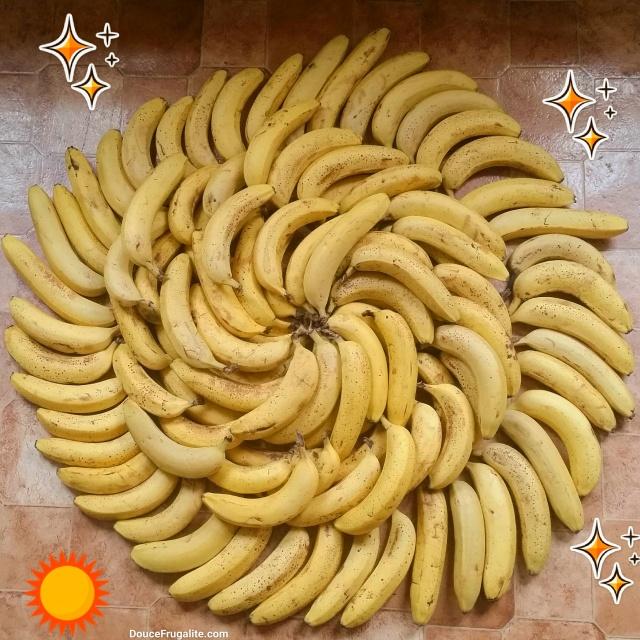 Mandala de bananes - plein de bananes en cercle