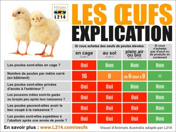 poussins broyés bio conventionnel poules cages exploitation animale végane végétalien vegan