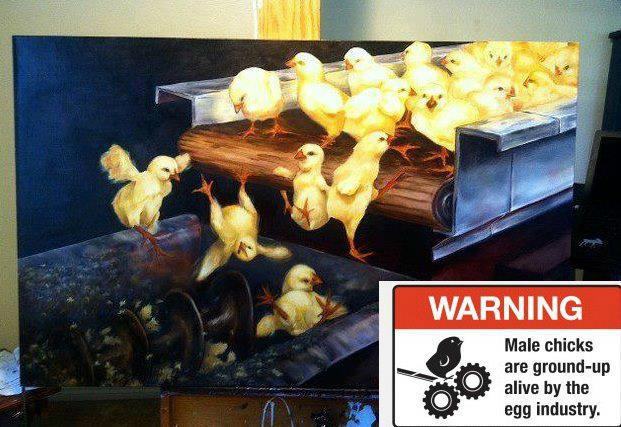 poussins broyés bio conventionnel poules cages exploitation animale végane tapis broyeur sexage