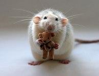 rat nounours
